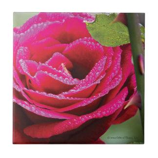Dewdrops on Deep Pink Rose - Ceramic Tile