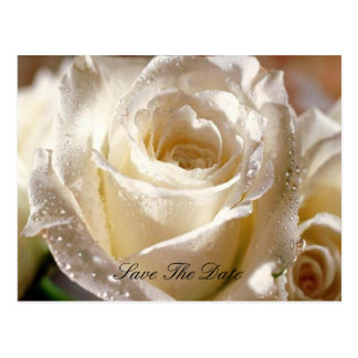 Dewy White Rose Save the Date postcard