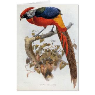 DG Elliot - Hybrid Pheasant Cards