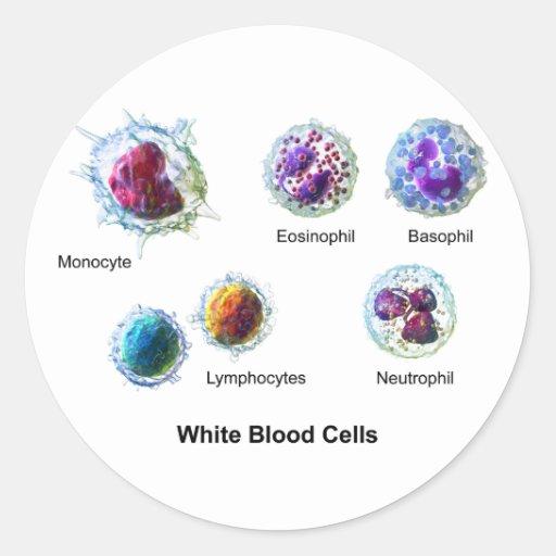 Diagram of White Blood Cells Leukocytes Round Stickers