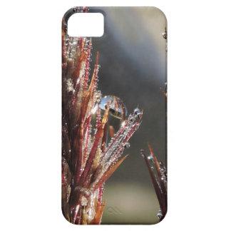 Diamond trees iPhone 5 cover