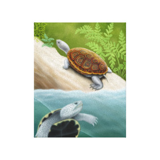Diamondback Terrapin Turtles Wrapped Canvas