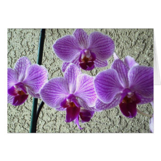 Diane's Orchids Card - Blank Inside