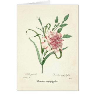 Dianthus caryophyllus card