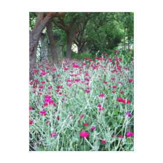 Dianthus Garden Canvas Print