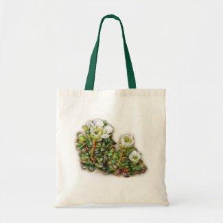 Diapensia lapponica bag bag