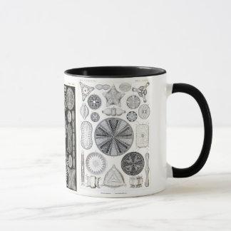 diatom, diatom, navicula mug