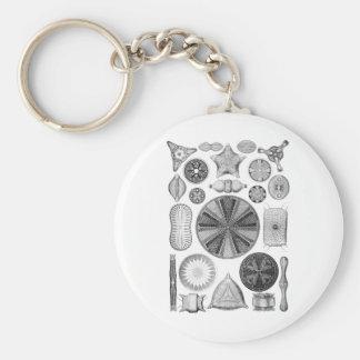 Diatoms Key Ring