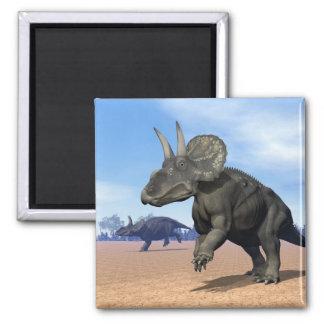 Diceratops/nedoceratops dinosaurs in the desert magnet