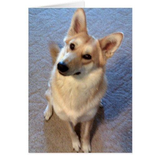 Did Someone Say Birthday Cake? Wolf Dog Greeting Card