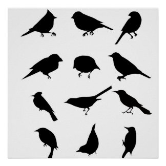 Different Birds Silhouette Set Poster