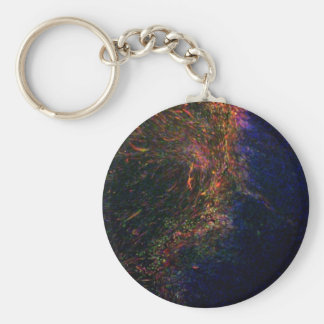 Differentiated pluripotent stem cells basic round button key ring