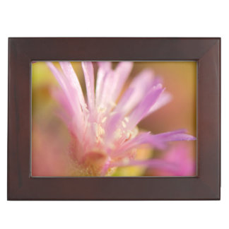 Diffused Image Of A Colorful Succulent Flower Keepsake Boxes