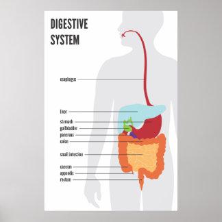 Digestive System Print
