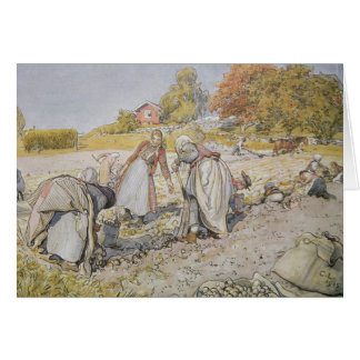 Digging Potatoes, 1905 Card