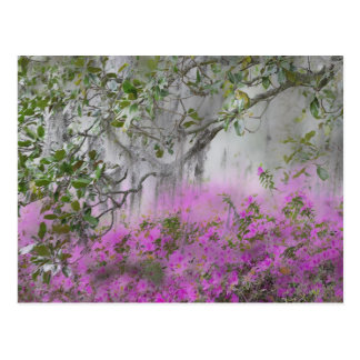 Digital Composite of Azaleas and magnolia tree Postcard