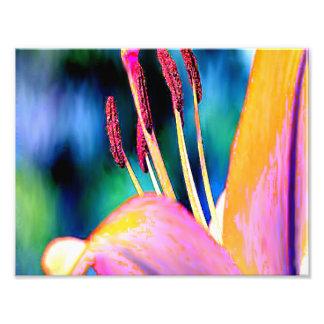 Digital Hibiscus Photographic Print