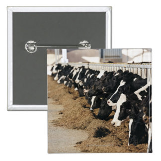 Diminishing Perspective of Cow's Heads Grazing 15 Cm Square Badge
