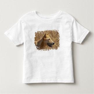Dingo (Canis lupus dingo) T-shirts