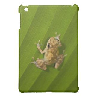 Dink frog (Eleutherodactylus diastema) on a leaf Case For The iPad Mini