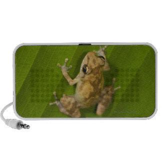 Dink frog (Eleutherodactylus diastema) on a leaf iPod Speaker