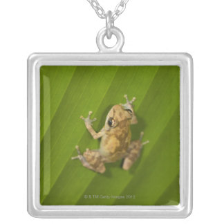 Dink frog (Eleutherodactylus diastema) on a leaf Square Pendant Necklace
