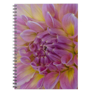 Dinnerplate Dahlia Note Books