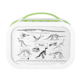 Dinosaur Fossils Custom Lunch Box
