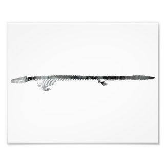 Dinosaur Skeleton Photographic Print