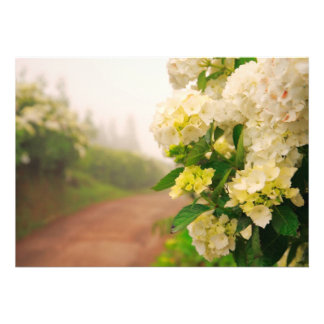 Dirt road and hydrangeas announcements
