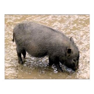 dirty black piglet jpg post cards