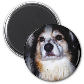 Dirty Digger Doggie 6 Cm Round Magnet
