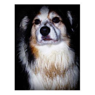 Dirty Digger Doggie Postcard