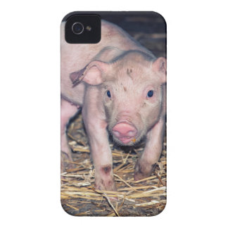 Dirty piglet iPhone 4 cover