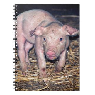 Dirty piglet notebook