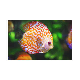 Discus fish canvas