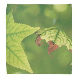 Diseased Maple Leaf Bandana