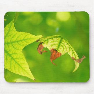 Diseased Maple Leaf Mouse Pad