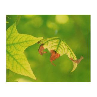 Diseased Maple Leaf Wood Print