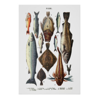 Display of different types of fish poster