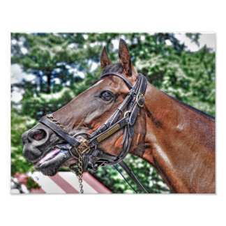 Divine Luck - Phipps Stables Photograph