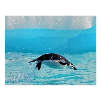 Diving Chinstrap Penguin Postcard