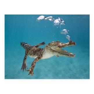 Diving crocodile postcard