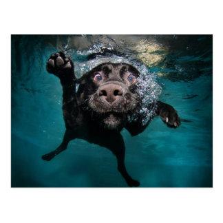 Diving Dog Postcard