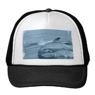 Diving Dolphin Baseball Hat