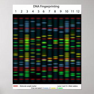 DNA fingerprinting Poster