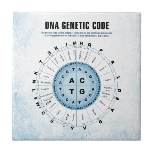 genetic code chart how to use
