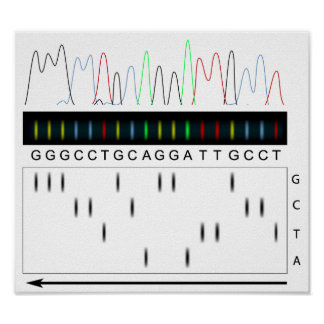 DNA sequencing principle Poster