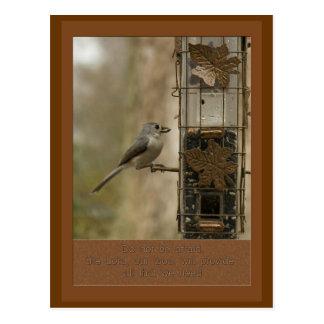 do not be afraid God will provide  bird on feeder Postcard