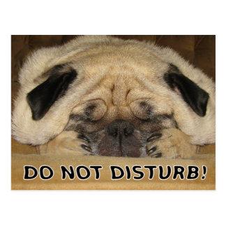 Do Not Disturb Pug Postcard